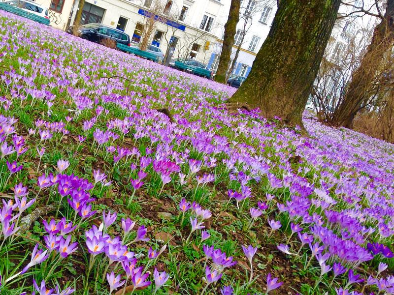 1_Frühling_2