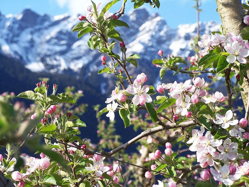 Blütenfesttage1
